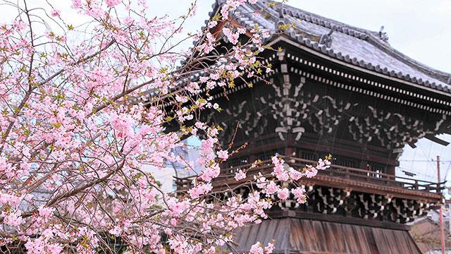 鐘楼(妙蓮寺)