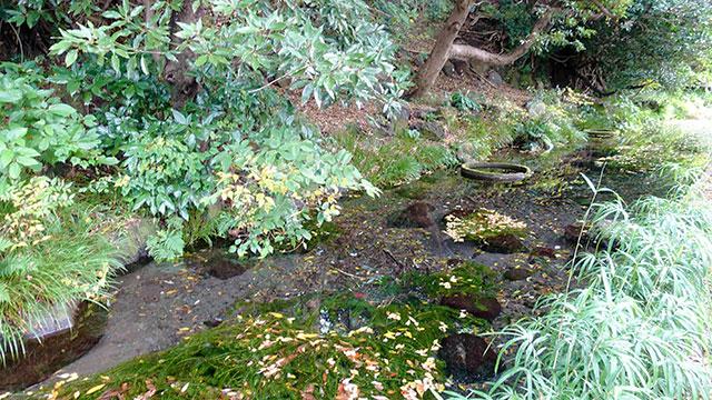 窪の湧水 富士湧水池(長泉町観光)