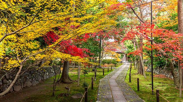 秋の鹿王院(鹿王院)
