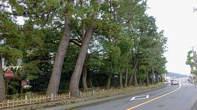 東海道松並木(清水町観光)