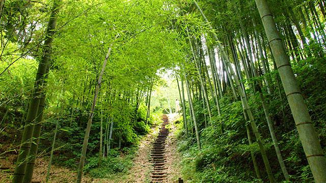 散策路(駿河平自然公園)