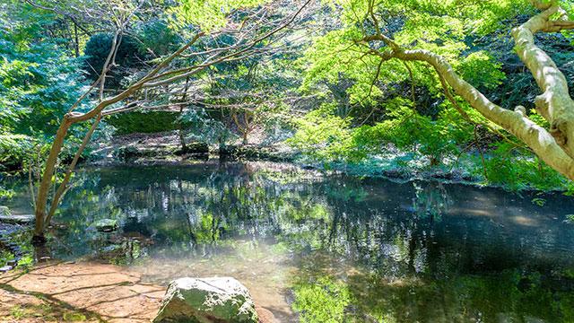 池(駿河平自然公園)
