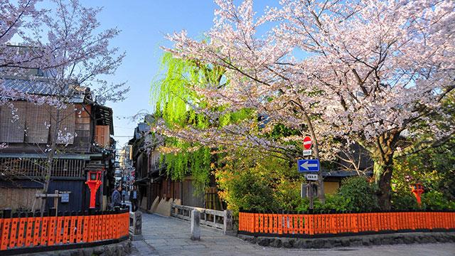 桜(巽橋)