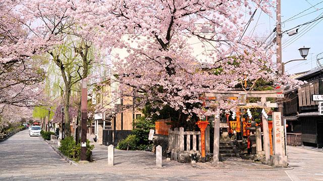 桜(辰巳大明神)