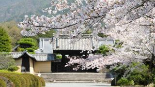 京都 随心院季節の花々が美しい小野小町ゆかりの寺院