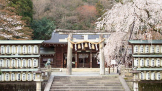 京都 大石神社大石内蔵助良雄を祀る桜が美しい神社