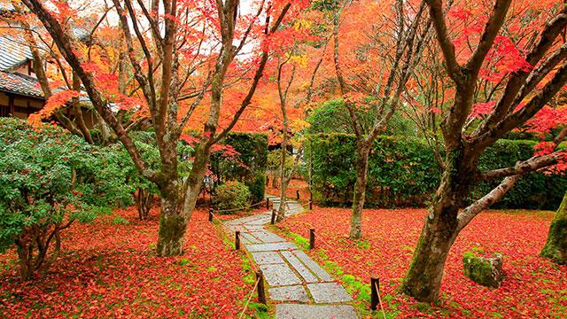 紅葉(西芳寺)