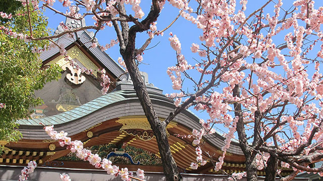 境内に咲く梅の花(湯島天満宮)