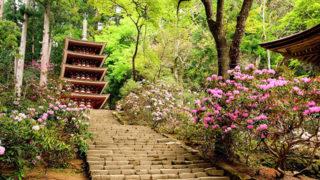 奈良 室生寺女人高野の別名を持つシャクナゲの名所