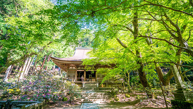 新緑(室生寺)