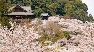 奈良 長谷寺七千株の牡丹が美しい奈良大和路の花の御寺