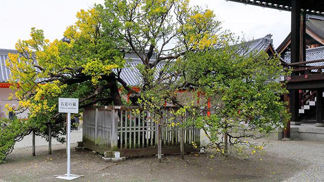 右近の橘(京都御所)